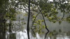 Kumana National Park, formerly Yala East, Kumana, Eastern Province, Sri Lanka Stock Footage