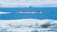Seals swimming on an ice floe, part 1 Stock Footage