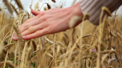 Stock Video Footage of slow motion hand moving over wheat growing on the field