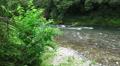Tama River Flows Thru Green Forest 4k or 4k+ Resolution