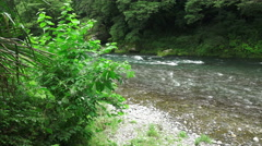 Tama River Flows Thru Green Forest Stock Footage