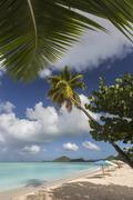 The branches of the palm trees create shade on the beach of Valley Church Stock Photos