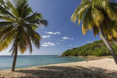 Palm trees thrive on the beautiful beach of Hawksbill which houses one of the Stock Photos