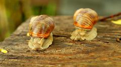 Competition in speed between two big snails Stock Photos