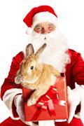 Santa with cute bunny - stock photo