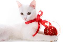 Decorated kitten Stock Photos