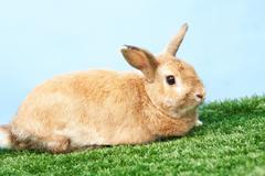 Fluffy rabbit Stock Photos