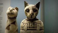 Ancient Egyptian cat mummy Stock Footage