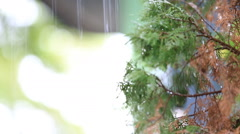 Leaf with drop of rain water to ground , Stock Footage
