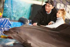 In delphinarium Stock Photos