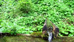 Stock Video Footage of Water spring in green forest