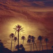 Almeria in Cabo palm trees in Rodalquilar Spain - stock photo
