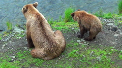 Brown Bear Sow & Her Cub Sit on River's Edge & Look for Fish Stock Footage