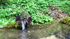 Water spring in green forest Stock Footage