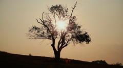 Silhouette of dead tree in sunrise - LS - stock footage