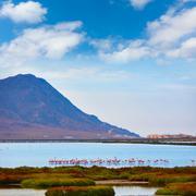 Las Salinas Cabo de Gata Almeria flamingos Spain Stock Photos