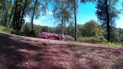 Rhododendrons at Lydney Park 02 Stock Footage