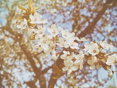 Beautiful apple tree branch Stock Photos