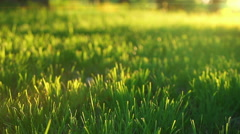 Grass field detail - stock footage