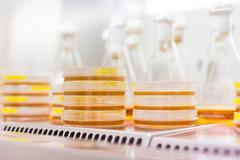 Petri dish in laminar flow Stock Photos
