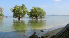 Mangrove in the area of low tide. Southeast Asia Stock Footage