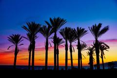 Stock Photo of Almeria Cabo de Gata sunset pam trees Retamar