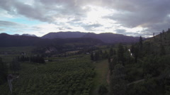 Orchard Drone Aerial Stock Footage