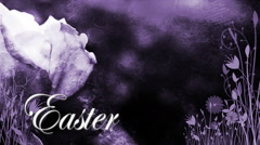 Easter Purple Rose 1080  background - stock footage
