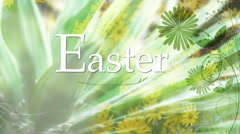 Green Easter Daisies 1080  background Stock Footage