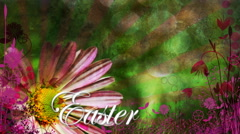 Pink Easter Daisy with Text 1080  background - stock footage