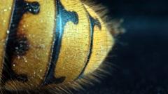 Dead hornet vespa crabro orbital shot 1/6 Stock Footage