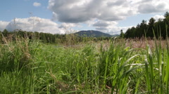 Mountain with Grass Stock Footage