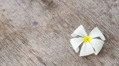 White Plumeria flower on wood texture Stock Footage