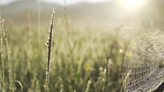 Spider web meadow illuminated by sunrise Stock Footage