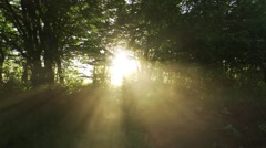 Sun rays penetrate through branches of trees and illuminated by warm light Stock Footage