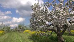 Industrial orchard garden with blossoming apple tree Stock Footage