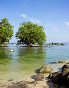 Mangrove in area of low. Southeast Asia. Thailand - stock photo