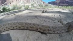 Great Basin Rattlesnake in a vast desert in Utah Stock Footage