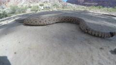 Great Basin Rattlesnake moving across a vast desert in Utah Stock Footage