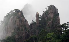 Huangshan pine trees - stock photo