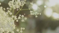 Spring Backgrounds Season Wedding Sunlight Flares Flowers Blossom Floral Forest - stock footage