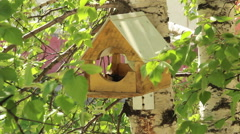 Birdhouse for birds Stock Footage