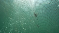Underwater bubbles rise in slow motion along a fishing net in the sea Stock Footage