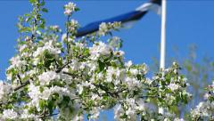 Blooming apple tree and Estonian flag. Stock Footage