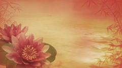 Waterlilies 1080  background Stock Footage