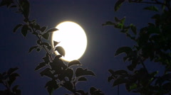 Moon and tree branch in June 2015 Stock Footage