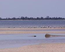 Birds on the coast of the Black Sea in Ukraine Stock Footage