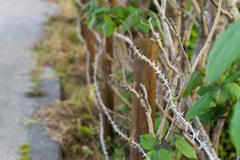 Barbed Wire and Overgrown Plants - stock photo