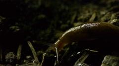Slug in dirt A - stock footage