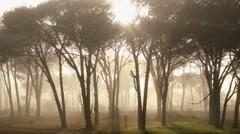 Male runner trees mist sunlight nature environment jogger Stock Footage